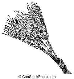 ripe wheat - engraving style illustration