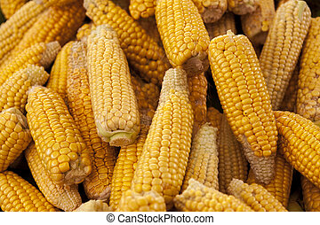 Ripe yellow corn cobs close-up at the farmers market of Iowa...