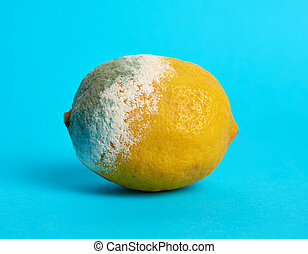 ripe yellow lemon with mold on a blue background