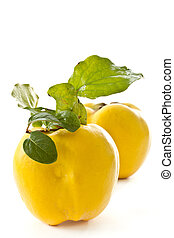 quince - ripe yellow quince autumn on a white background