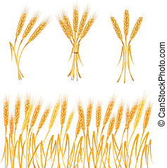 Ripe yellow wheat ears, agricultural vector illustration