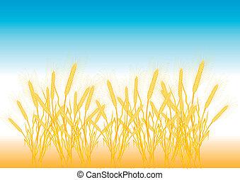 Ripe yellow wheat ears on a field