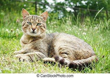 riposare, erba, gatto