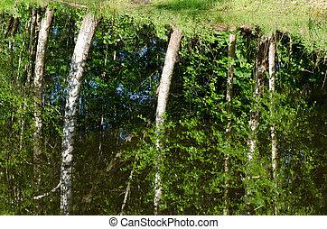 Ripple lake water surface birch tree reflections