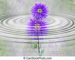 Rippled Dahlia - Purple dahlia in rippled water effect.