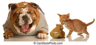 rir, tolo, cão, gatinho