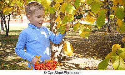 rire, enfant, ensoleillé, rowan, jour, jeux, parc, berries., feuilles automne, il, merrily, jaune