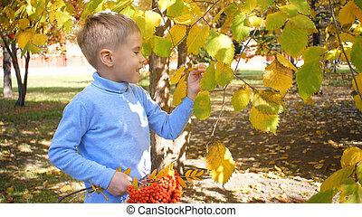 rire, jaune, parc, enfant, berries., jeux, jour, merrily, rowan, feuilles, ensoleillé, automne, il