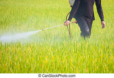 ris, fält, Bonde, besprutning, insektsmedel