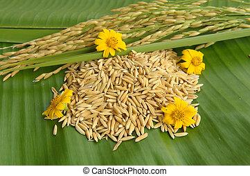 ris, och, blomma, på, grön leaf, bakgrund