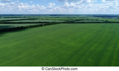 Rise on drone above green cereal field, Russia - Rise on...