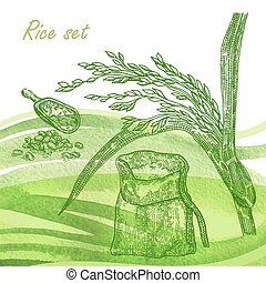 Rise set. Hand drawn rise plant and grain on watercolor backgrou