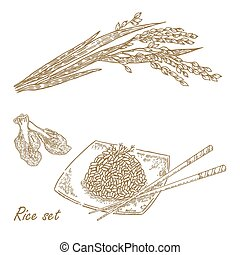 Rise set. Hand drawn vector illustration rice plant, rice porrid