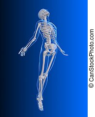3d rendered illustration of a transparent male body with organs