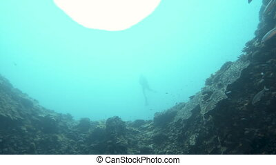 Rising from a sinkhole underwater - A shot underwater in...