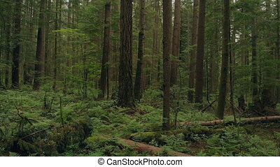 Rising From Forest Floor To Tree Branches Above - Aerial...