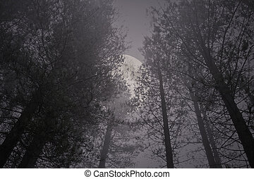 Rising full moon in a misty pinewood