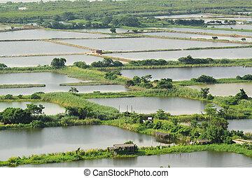 riso, Cina, terrazzo, paesaggio