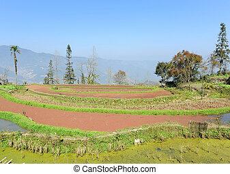 riso, terrazzi, di, yuanyang, in, yunnan, porcellana