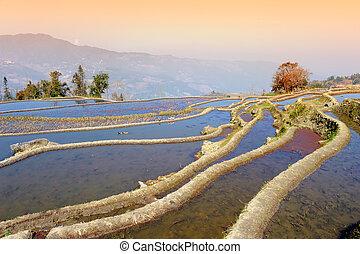 riso, yuanyang, yunnan, terrazzi
