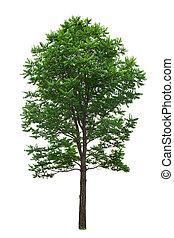 ritaglio, albero, isolato, size:, fondo, percorso, bianco, xxl