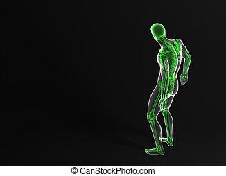 ritaglio, scheletro, contiene, retro, percorso, vista., man.