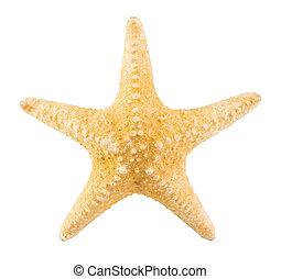 ritaglio, starfish, isolato, fondo, percorso, bianco