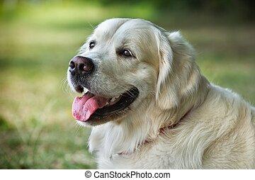 ritratto, bellezza, cane, giovane