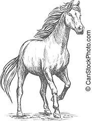 ritratto, cavallo, bianco, zoccolo, camminare passo pesante