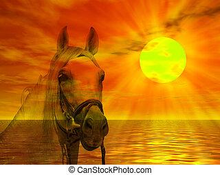 ritratto, cavallo, tramonto