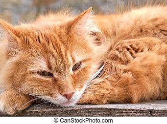 Divertente Baffi Gatto Divertente Gatto Concreto Dire Bugie