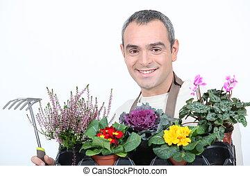 Giacinto, bulbo, vaso, fiori. Giacinto, lampadine, vaso, fondo, fiori bianchi.