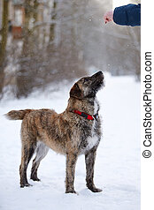 ritratto, ispido, dog/