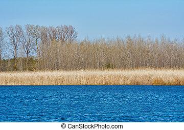riva lago, in, autunno