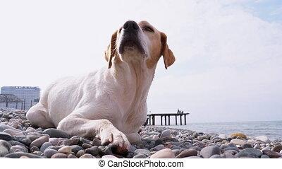 rivage, dog., sdf, sea., pierre, malheureux, errant, ...