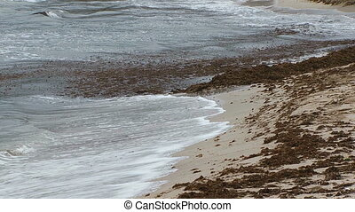 rivage, lavage, sale, mer, vagues