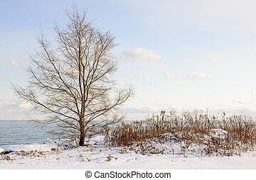rivage, ontario, hiver, lac