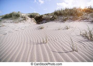 rivage, scandinave, plage, vent, formé