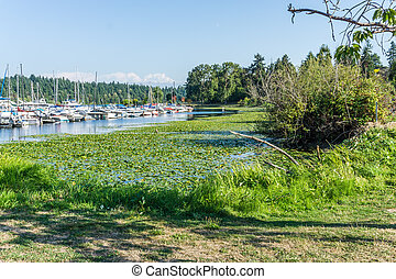 rivage, seattle, lac, 5