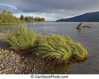rivage, vue, de, meziadin, lac, à, herbe, dans, les, premier plan, et, a, waterlogged, souche, submergé, sous-marin