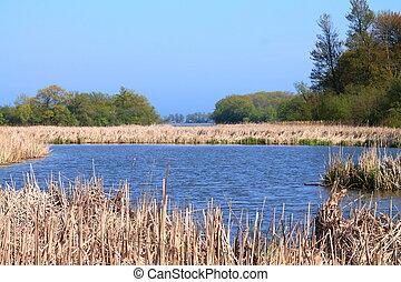 rivages, lynn, conservation, secteur