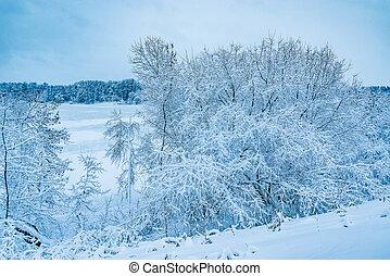 river., árvores inverno