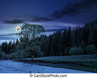 River among the forest at night - River flows among of a...