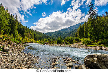 River among the forest in picturesque mountains in...
