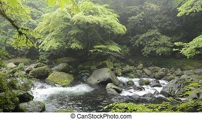 River among the rocks