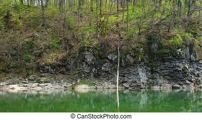 River and forest on a rocky shore. - River and spring forest...