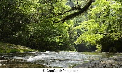 River and green hardwood forest - Flow of river and green...