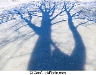 trees in winter season