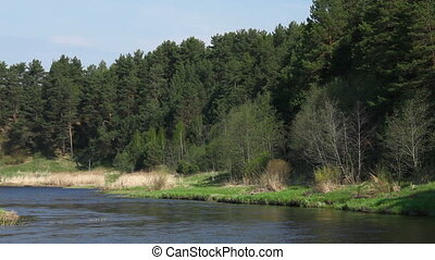 River and pine-trees at spring, Yaroslavl region, Russia....