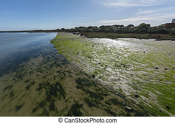 River bank near the mouth of the sea, with algae